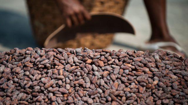 une-femme-ramasse-des-feves-de-cacao-le-28-mars-2011-a-chuao-pres-de-caracas_4538772